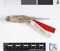 View Perognathus flavus fuliginosus digital asset number 6
