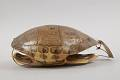 View Turtle-Shell Drum digital asset number 2