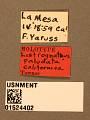 View Listrognathus (Fenestula) paludata california Townes digital asset number 3