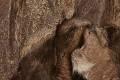 View Fur Pants digital asset number 2