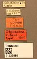 View Ctenochira infans Townes & Townes, 1949 digital asset number 3