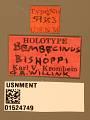 View Bembecinus bishoppi digital asset number 3