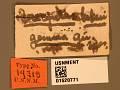 View Unknown gemma Girault digital asset number 3