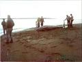 View Mesoplodon stejnegeri True, 1885 digital asset number 6