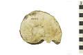 View Ammonite digital asset number 0