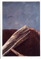 View Mesoplodon sp. digital asset number 0