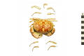 View crab, Marine Crab, Spotted Crab, Spotted Reef Crab digital asset number 0