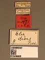 View Elis dives Provancher, 1888 digital asset number 3
