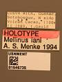View Mellinus iani Menke, 1996 digital asset number 3