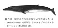 View Balaenoptera omurai Wada et al., 2003 digital asset number 6