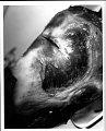 View Cephalorhynchus hectori (Van Beneden, 1881) digital asset number 21