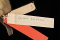 View Carduelis barbata digital asset number 4
