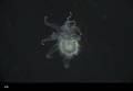 View Astropectinidae digital asset number 2