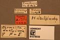 View Harmolita dactylicola digital asset number 3