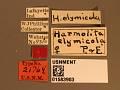 View Harmolita elymicola digital asset number 3