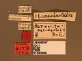 View Harmolita occidentalis digital asset number 2