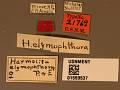 View Harmolita elymophthora digital asset number 3
