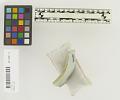 View Ming Blue & White Porcelain Saucer Sherd digital asset number 4
