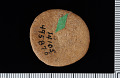 View Dendraster gibbsii var. mirus Stewart in Woodring et al. digital asset number 1