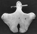 View Balaenoptera musculus (Linnaeus, 1758) digital asset number 57