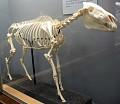 View Equus burchellii digital asset number 0
