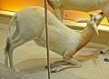 View Oryx dammah digital asset number 0
