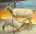 View Oryx dammah digital asset number 1