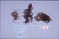 View Vegetable & Woolen Strings For Mummy (A11059-0) digital asset number 0