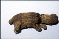 View Knitted Animals (Toys) digital asset number 1