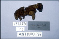 View Knitted Animals (Toys) digital asset number 0