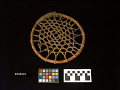 View Wheel Used In Games By Berthold Indians digital asset number 0