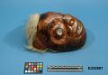 View Copper Mask Shaman's digital asset number 3