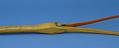 View Snipe Flute digital asset number 4