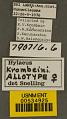 View Hylaeus (Paraprosopis) krombeini Snelling, 1980 digital asset number 2