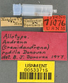 View Andrena (Cnemidandrena) rodilla Donovan, 1977 digital asset number 2