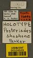 View Proteriades (Hoplitina) shoshone Parker, 1976 digital asset number 2