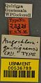 View Augochlora quiriguensis Cockerell, 1913 digital asset number 2