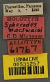 View Sphecodes macswaini Michener, 1954 digital asset number 2