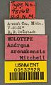 View Andrena (Trachandrena) arenakensis Mitchell, 1960 digital asset number 2