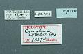 View Cymolomia cyanosticha Clarke, 1976 digital asset number 1