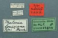 View Phalonia louisiana Busck, 1907 digital asset number 1