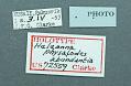 View Heleanna physalodes abundantia Clarke, 1976 digital asset number 1