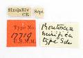 View Proutoscia mirifica Schaus, 1912 digital asset number 1