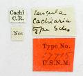 View Leucula cachiaria Schaus, 1912 digital asset number 1