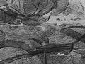 View Ovatus reticulatus digital asset number 2