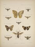 Lepidoptera & Hymenoptera.