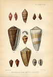 New shells from various localities