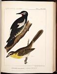 Birds--Plate XXXIV