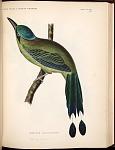 Birds--Pl VIII (46)