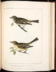 Birds--Pl LXXVI